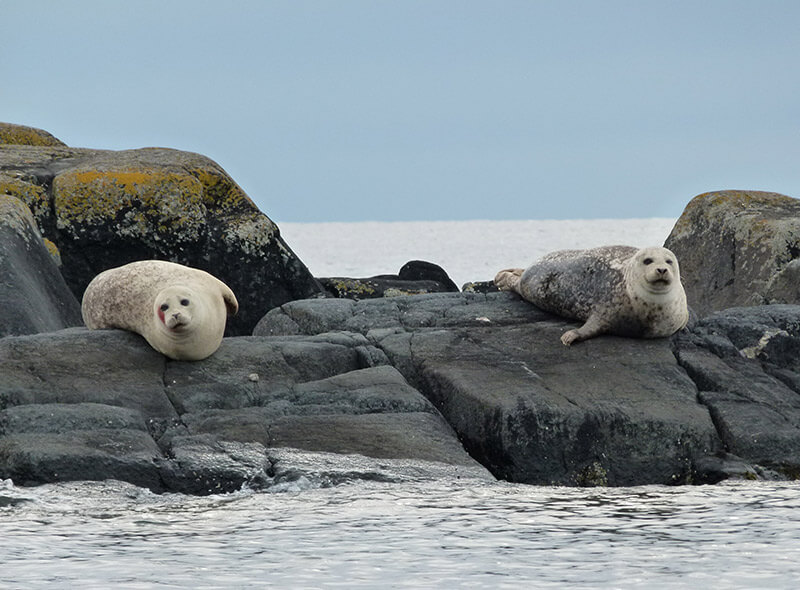 Some Local Seals